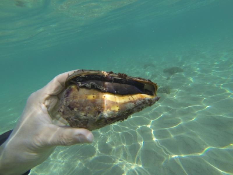 2015_Sandy_Beach_Fujairah_Underwater1