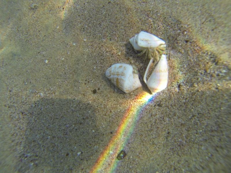 2015_Sandy_Beach_Fujairah_Underwater13