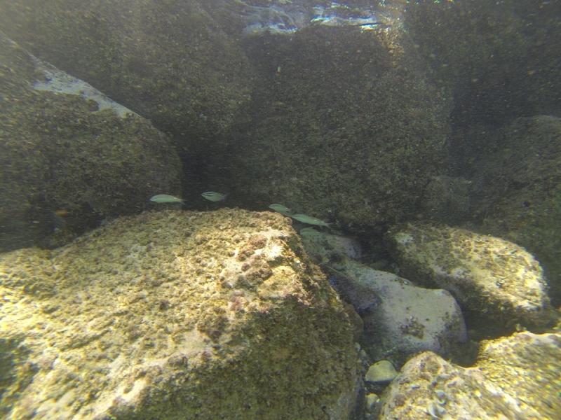 2015_Sandy_Beach_Fujairah_Underwater6